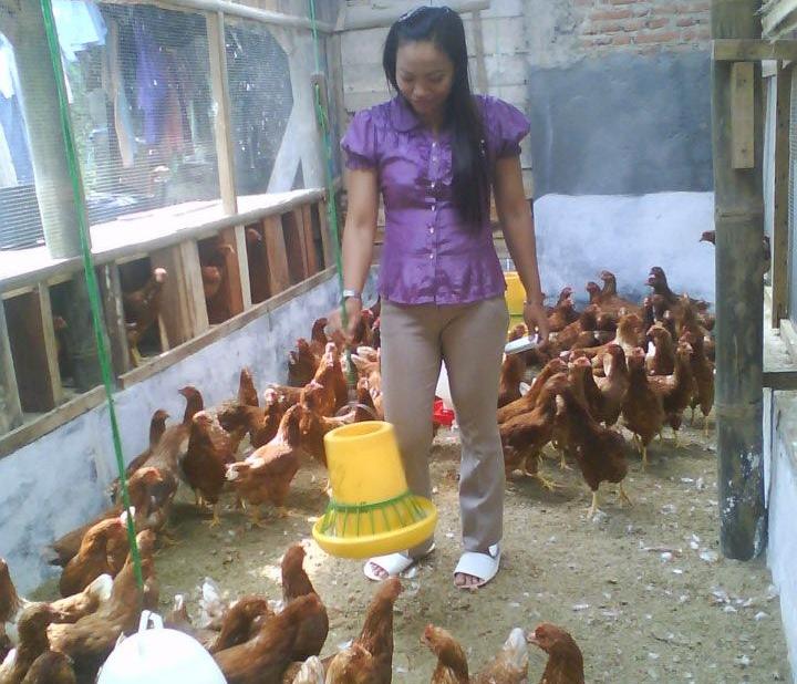 Anik Sugiono Mantan TKI Malaysia Yang Mengembangkan Bisnis Ayam Petelor Ramah Lingkungan Di Daerah Ngantang